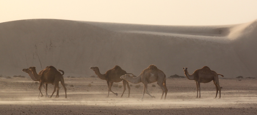 Sahara dunes Légendes Evasions Marrakech Dakhla