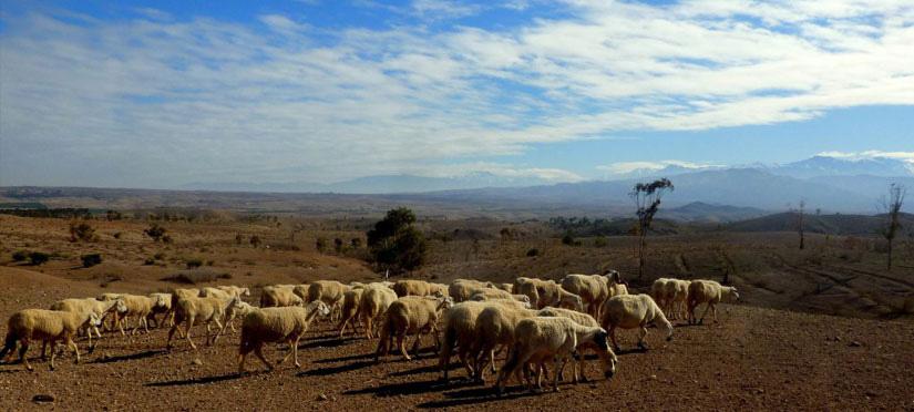 Désert Agafay - Maroc Légendes Evasions
